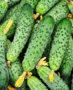 Cucumbers in bulk