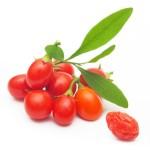 Goji berry isolated